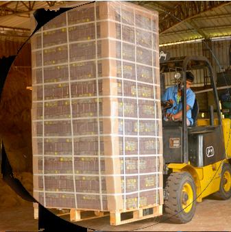 coco peat manufacturer forklift